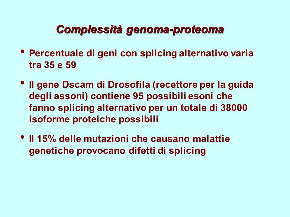 Complessità genoma-proteoma Percentuale di geni con splicing alternativo varia tra 35 e 59 Il gene Dscam di Drosofila (recettore per la guida degli assoni) contiene 95 possibili esoni che fanno splicing alternativo per un totale di 38000 isoforme proteiche possibili Il 15% delle mutazioni che causano malattie genetiche provocano difetti di splicing