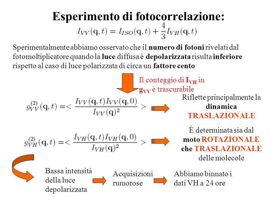 Esperimento di fotocorrelazione: Sperimentalmente abbiamo osservato che il numero di fotoni rivelati dal fotomoltiplicatore quando la luce diffusa è depolarizzata risulta inferiore rispetto al caso di luce polarizzata di circa un fattore cento Riflette principalmente la dinamica TRASLAZIONALE Il conteggio di I VH in g VV è trascurabile È determinata sia dal moto ROTAZIONALE che TRASLAZIONALE delle molecole Bassa intensità della luce depolarizzata Acquisizioni rumorose Abbiamo binnato i dati VH a 24 ore