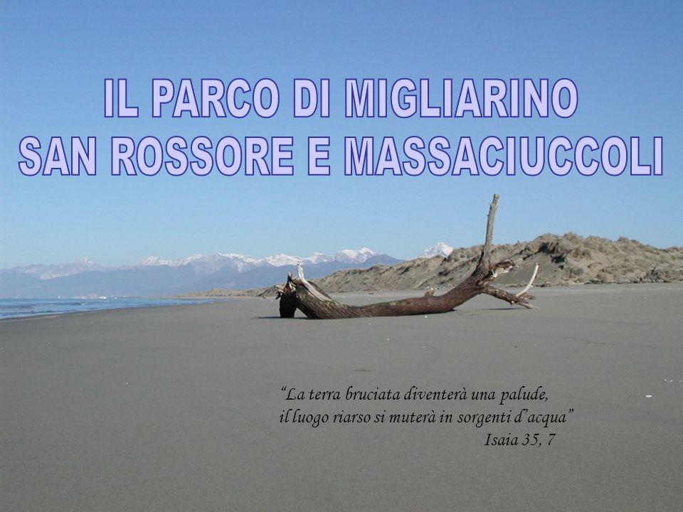 L'istituzione da parte della Regione Toscana del Parco Naturale Regionale di Migliarino, San Rossore, Massaciuccoli è ufficialmente avvenuta nel 1979, con la Legge Regionale n.