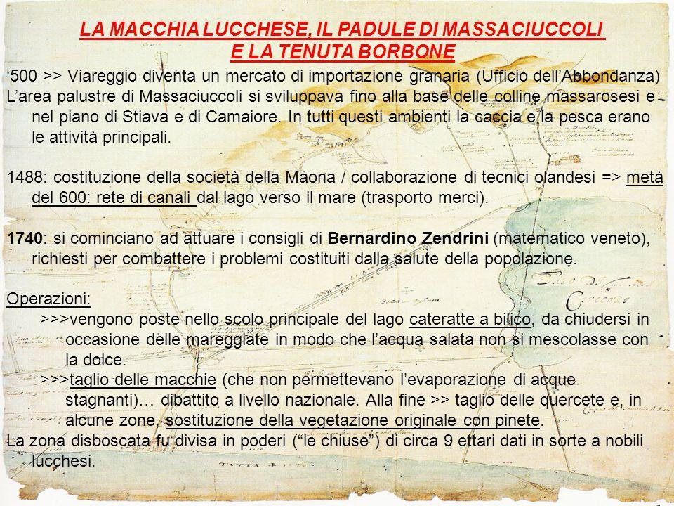 LA MACCHIA LUCCHESE, IL PADULE DI MASSACIUCCOLI E LA TENUTA BORBONE '500 >> Viareggio diventa un mercato di importazione granaria (Ufficio dell'Abbondanza) L'area palustre di Massaciuccoli si sviluppava fino alla base delle colline massarosesi e nel piano di Stiava e di Camaiore.