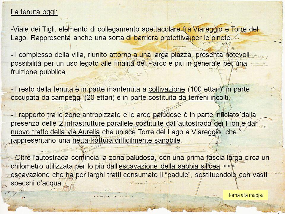Torna alla mappa La tenuta oggi: -Viale dei Tigli: elemento di collegamento spettacolare fra Viareggio e Torre del Lago.