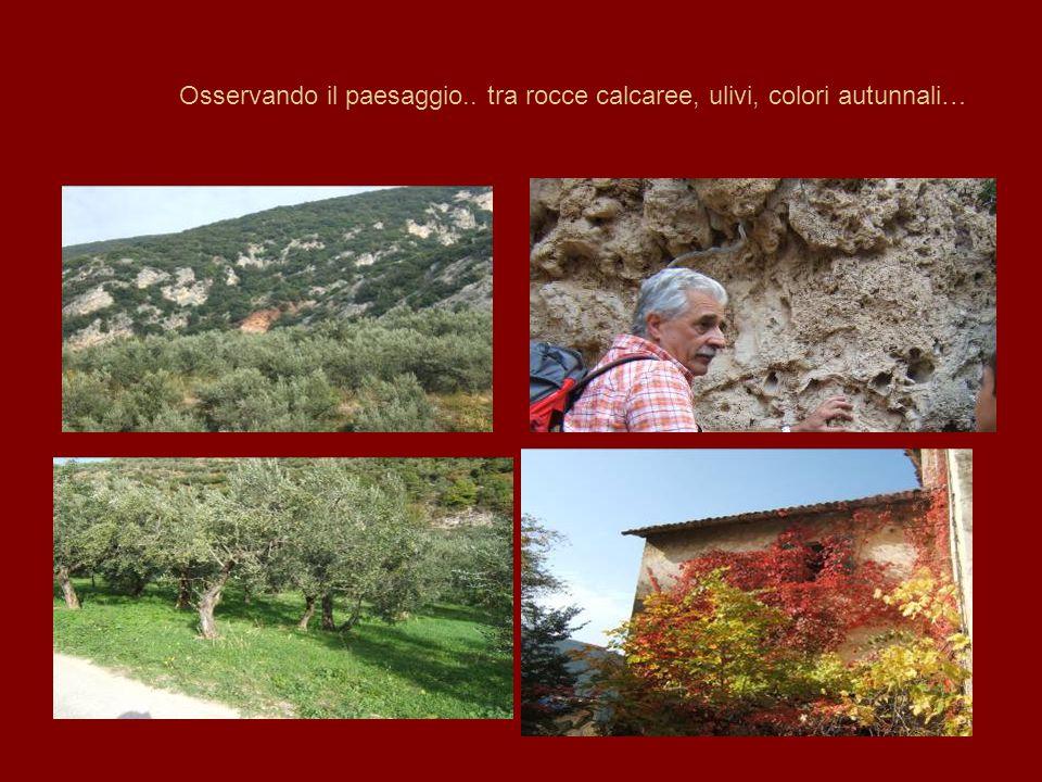 Osservando il paesaggio.. tra rocce calcaree, ulivi, colori autunnali…