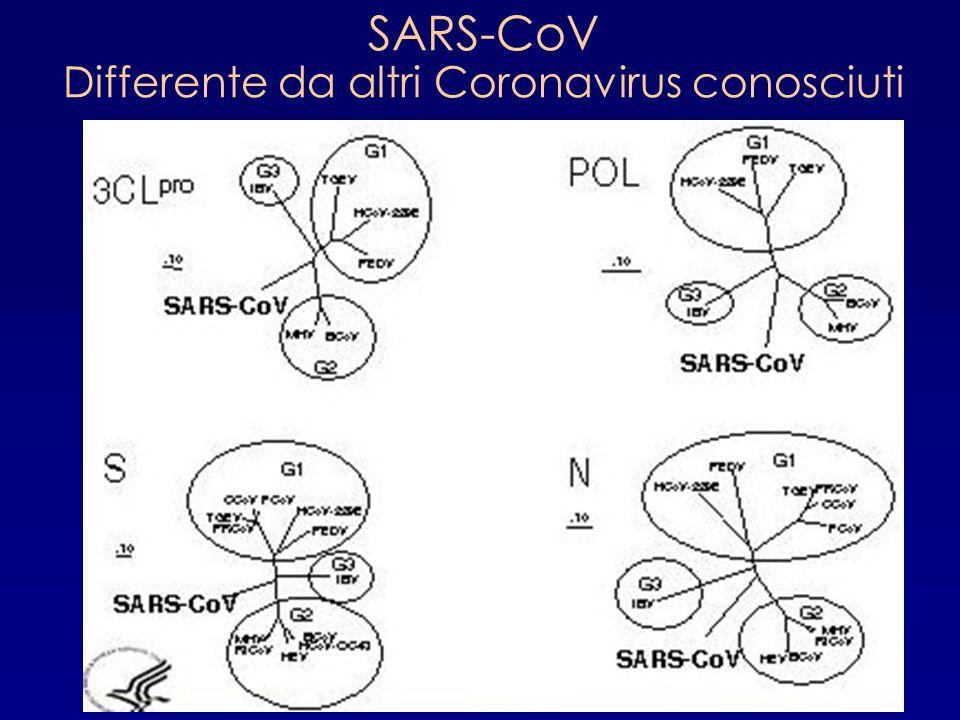 SARS-CoV Differente da altri Coronavirus conosciuti