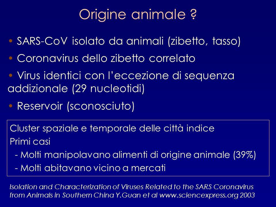 SARS-CoV isolato da animali (zibetto, tasso) Coronavirus dello zibetto correlato Virus identici con l'eccezione di sequenza addizionale (29 nucleotidi