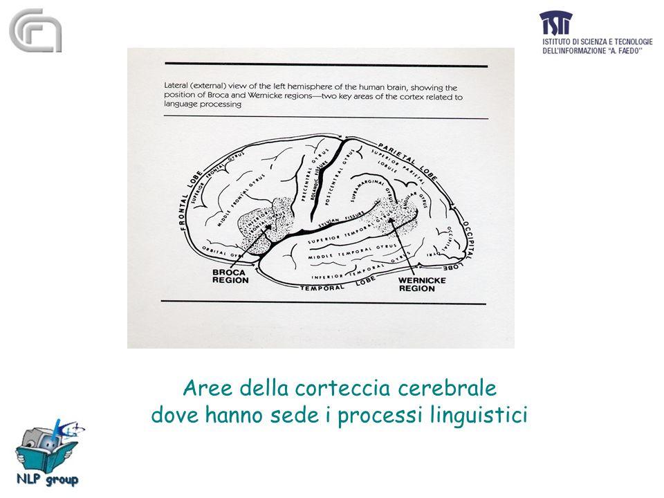 Aree della corteccia cerebrale dove hanno sede i processi linguistici