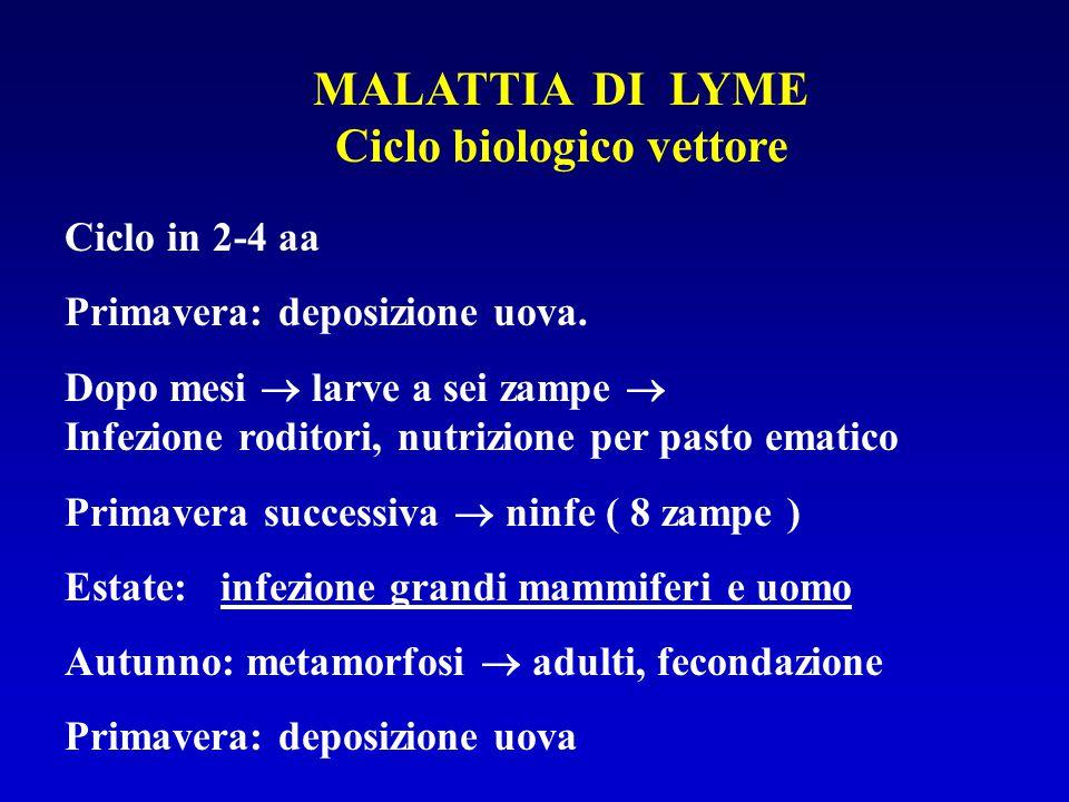 MALATTIA DI LYME Ciclo biologico vettore Ciclo in 2-4 aa Primavera: deposizione uova. Dopo mesi  larve a sei zampe  Infezione roditori, nutrizione p