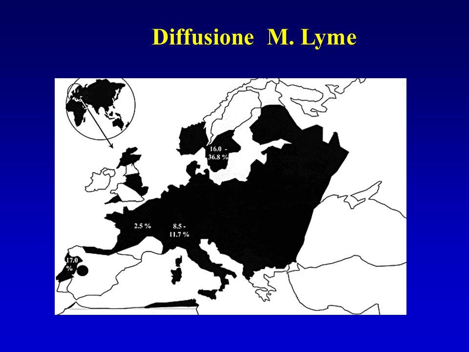 Diffusione M. Lyme
