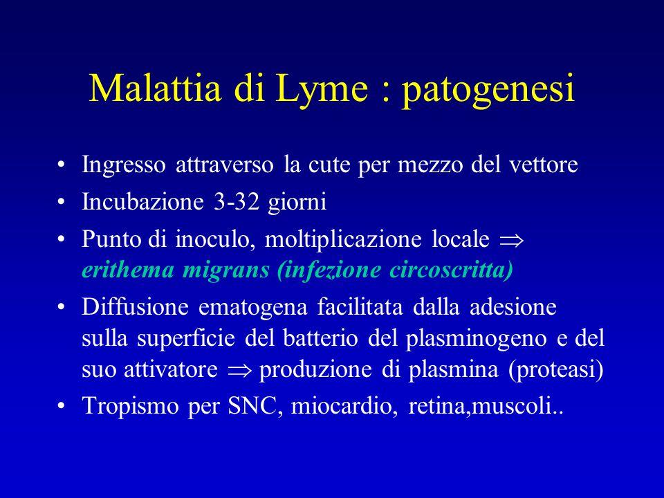 Malattia di Lyme : patogenesi Ingresso attraverso la cute per mezzo del vettore Incubazione 3-32 giorni Punto di inoculo, moltiplicazione locale  eri