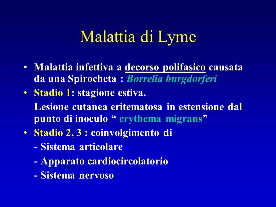 Malattia di Lyme Malattia infettiva a decorso polifasico causata da una Spirocheta : Borrelia burgdorferi Stadio 1: stagione estiva. Lesione cutanea e