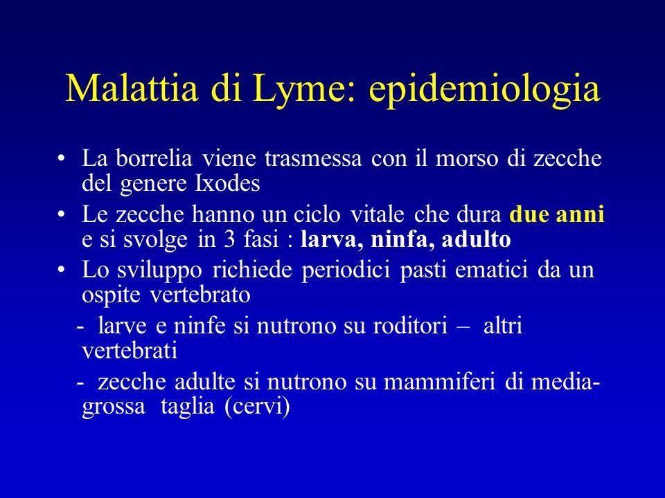Malattia di Lyme: epidemiologia La borrelia viene trasmessa con il morso di zecche del genere Ixodes Le zecche hanno un ciclo vitale che dura due anni