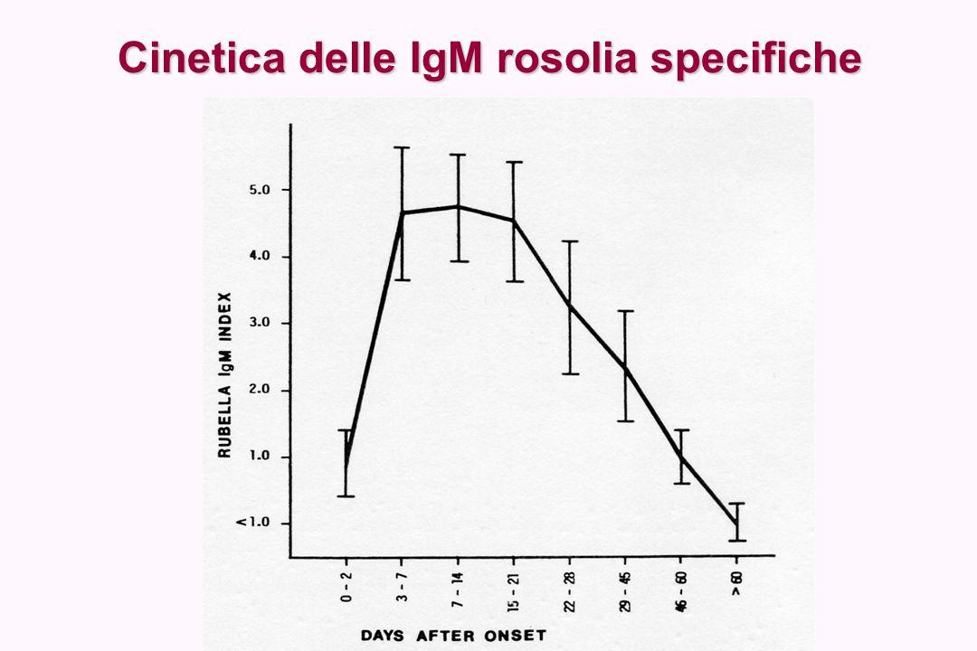 Prelievo per anticorpi IgM specifici Va eseguito il più rapidamente possibile, preferibilmente entro 7-10 giorni dalla comparsa dell'esantema Se il prelievo è stato eseguito nei primi 5 giorni ed è risultato negativo, il test va ripetuto su un nuovo campione di sangue prelevato a distanza di qualche giorno