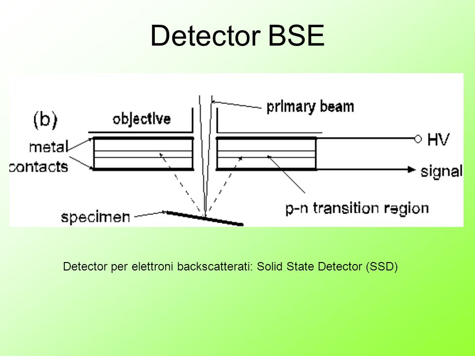 Detector per elettroni backscatterati: Solid State Detector (SSD) Detector BSE