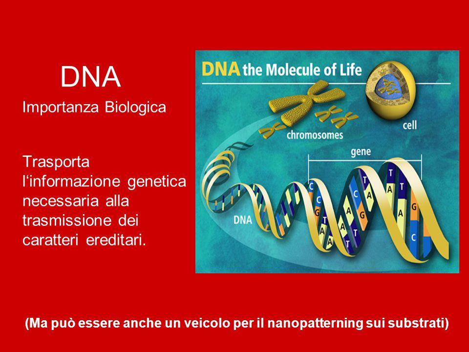 DNA Importanza Biologica Trasporta l'informazione genetica necessaria alla trasmissione dei caratteri ereditari. (Ma può essere anche un veicolo per i