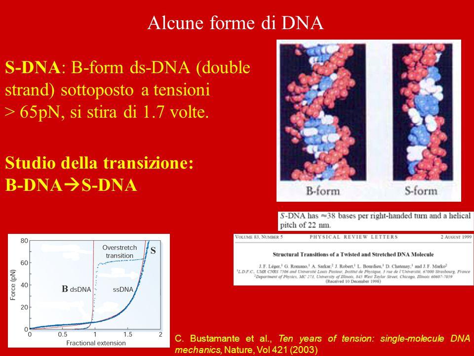 Alcune forme di DNA S-DNA: B-form ds-DNA (double strand) sottoposto a tensioni > 65pN, si stira di 1.7 volte. Studio della transizione: B-DNA  S-DNA