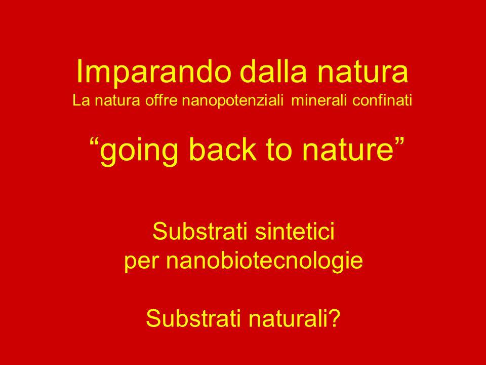 """Imparando dalla natura La natura offre nanopotenziali minerali confinati """"going back to nature"""" Substrati sintetici per nanobiotecnologie Substrati na"""