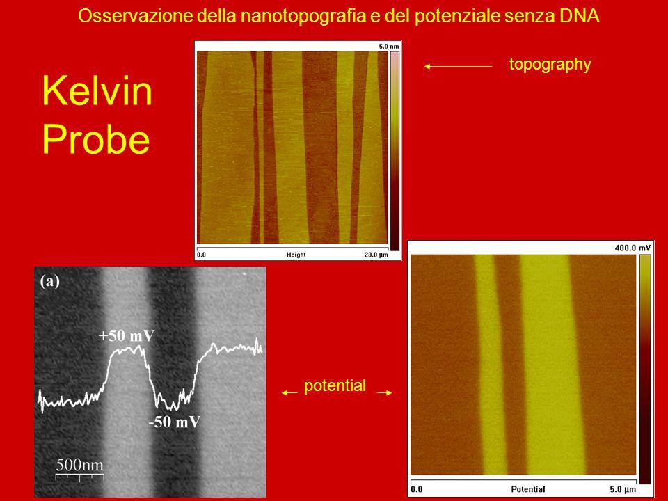 Osservazione della nanotopografia e del potenziale senza DNA Kelvin Probe topography potential