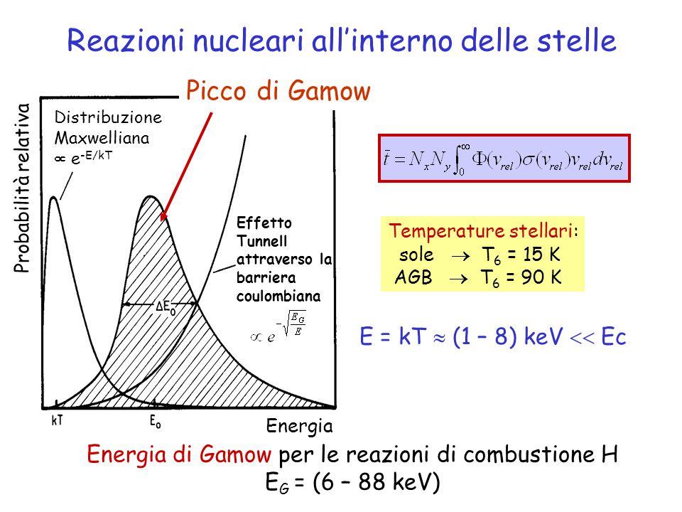 Picco di Gamow Energia Probabilità relativa Distribuzione Maxwelliana  e -E/kT Effetto Tunnell attraverso la barriera coulombiana Reazioni nucleari all'interno delle stelle Temperature stellari: sole  T 6 = 15 K AGB  T 6 = 90 K E = kT  (1 – 8) keV  Ec Energia di Gamow per le reazioni di combustione H E G = (6 – 88 keV)