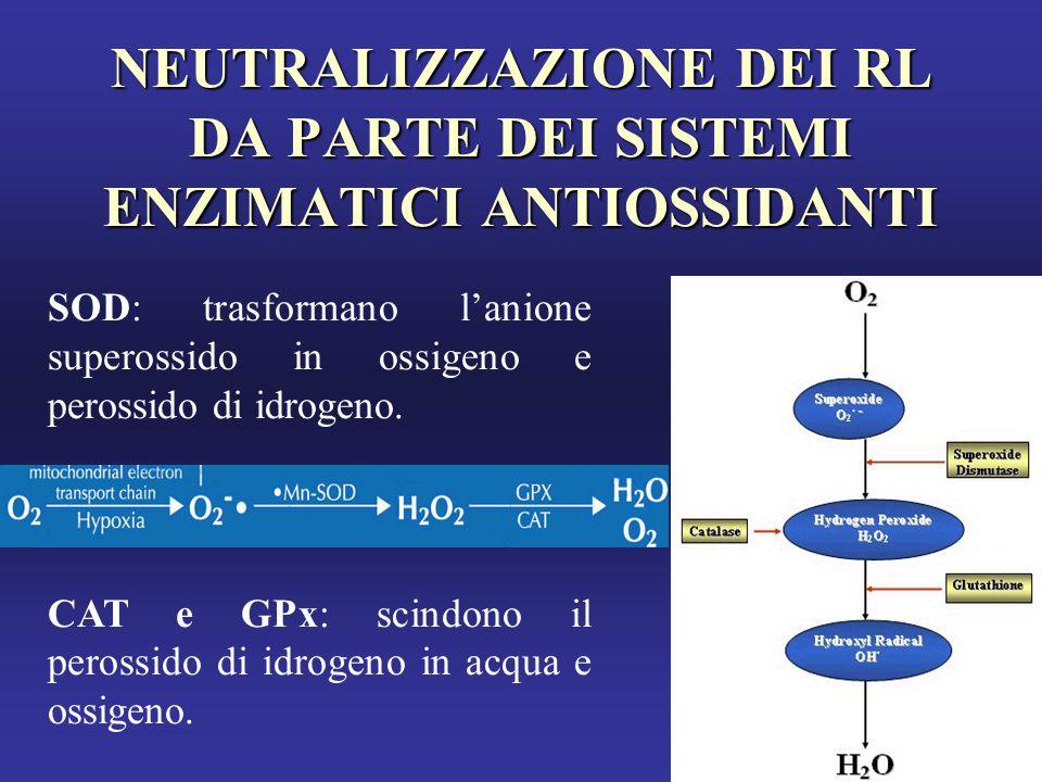 NEUTRALIZZAZIONE DEI RL DA PARTE DEI SISTEMI ENZIMATICI ANTIOSSIDANTI SOD: trasformano l'anione superossido in ossigeno e perossido di idrogeno.