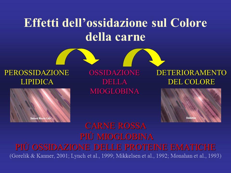 Effetti dell'ossidazione sul Colore della carne CARNE ROSSA PIÙ MIOGLOBINA PIÙ MIOGLOBINA PIÙ OSSIDAZIONE DELLE PROTEINE EMATICHE (Gorelik & Kanner, 2001; Lynch et al., 1999; Mikkelsen et al., 1992; Monahan et al., 1993) PEROSSIDAZIONE LIPIDICA OSSIDAZIONEDELLAMIOGLOBINA DETERIORAMENTO DEL COLORE