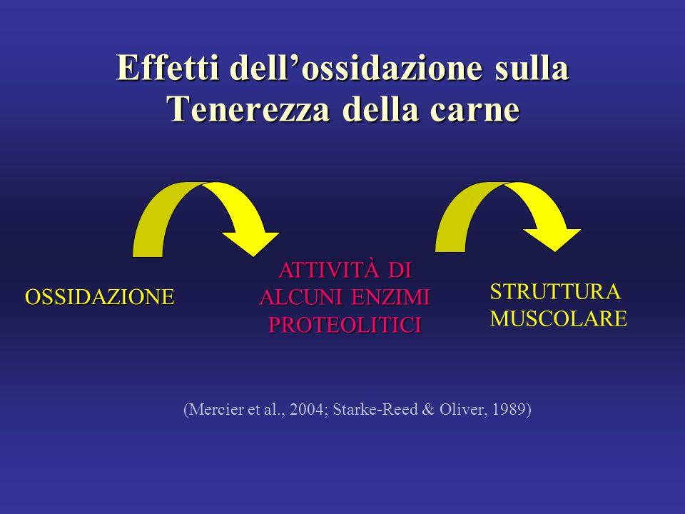 Effetti dell'ossidazione sulla Tenerezza della carne (Mercier et al., 2004; Starke-Reed & Oliver, 1989) OSSIDAZIONE ATTIVITÀ DI ALCUNI ENZIMI PROTEOLITICI STRUTTURA MUSCOLARE