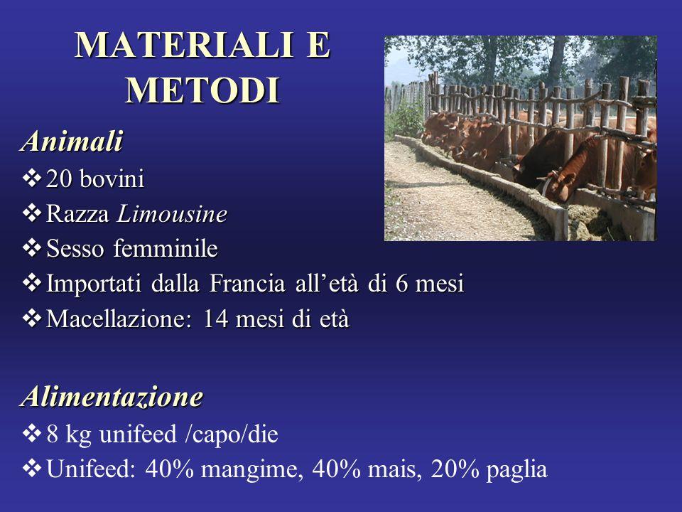 MATERIALI E METODI Animali  20 bovini  Razza Limousine  Sesso femminile  Importati dalla Francia all'età di 6 mesi  Macellazione: 14 mesi di età Alimentazione  8 kg unifeed /capo/die  Unifeed: 40% mangime, 40% mais, 20% paglia
