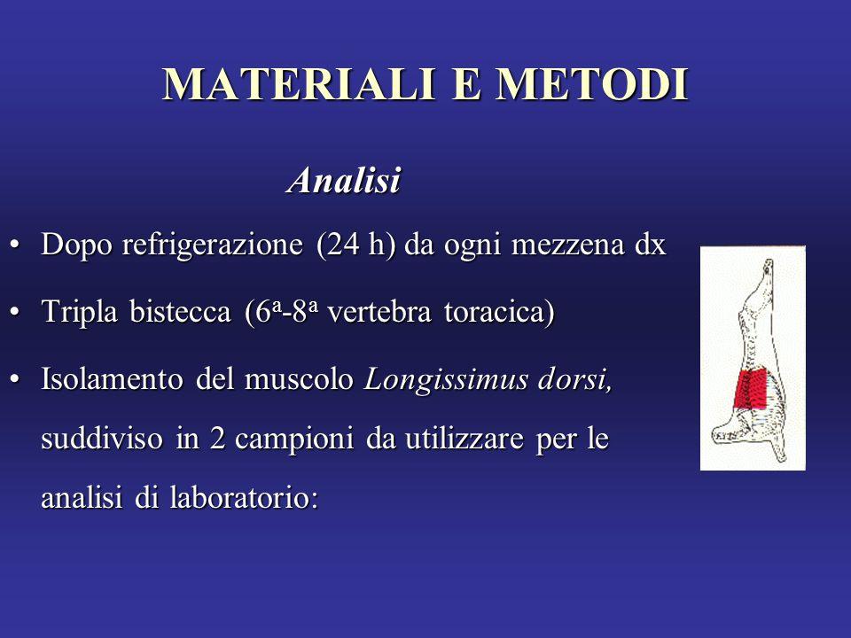 MATERIALI E METODI Analisi Dopo refrigerazione (24 h) da ogni mezzena dxDopo refrigerazione (24 h) da ogni mezzena dx Tripla bistecca (6 a -8 a vertebra toracica)Tripla bistecca (6 a -8 a vertebra toracica) Isolamento del muscolo Longissimus dorsi, suddiviso in 2 campioni da utilizzare per le analisi di laboratorio:Isolamento del muscolo Longissimus dorsi, suddiviso in 2 campioni da utilizzare per le analisi di laboratorio:
