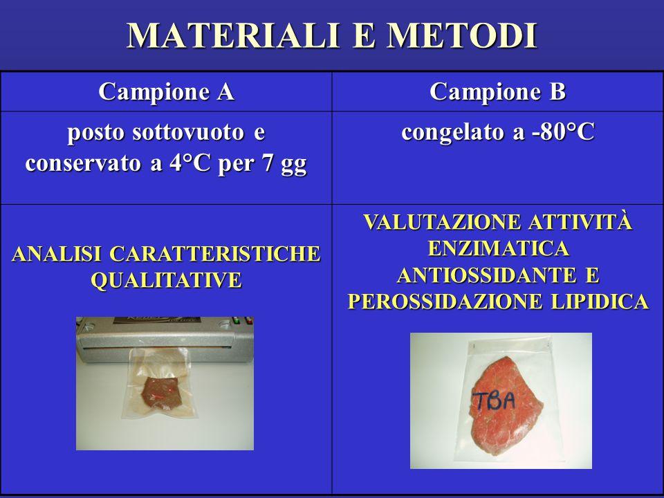 MATERIALI E METODI Campione A Campione B posto sottovuoto e conservato a 4°C per 7 gg congelato a -80°C ANALISI CARATTERISTICHE QUALITATIVE VALUTAZIONE ATTIVITÀ ENZIMATICA ANTIOSSIDANTE E PEROSSIDAZIONE LIPIDICA