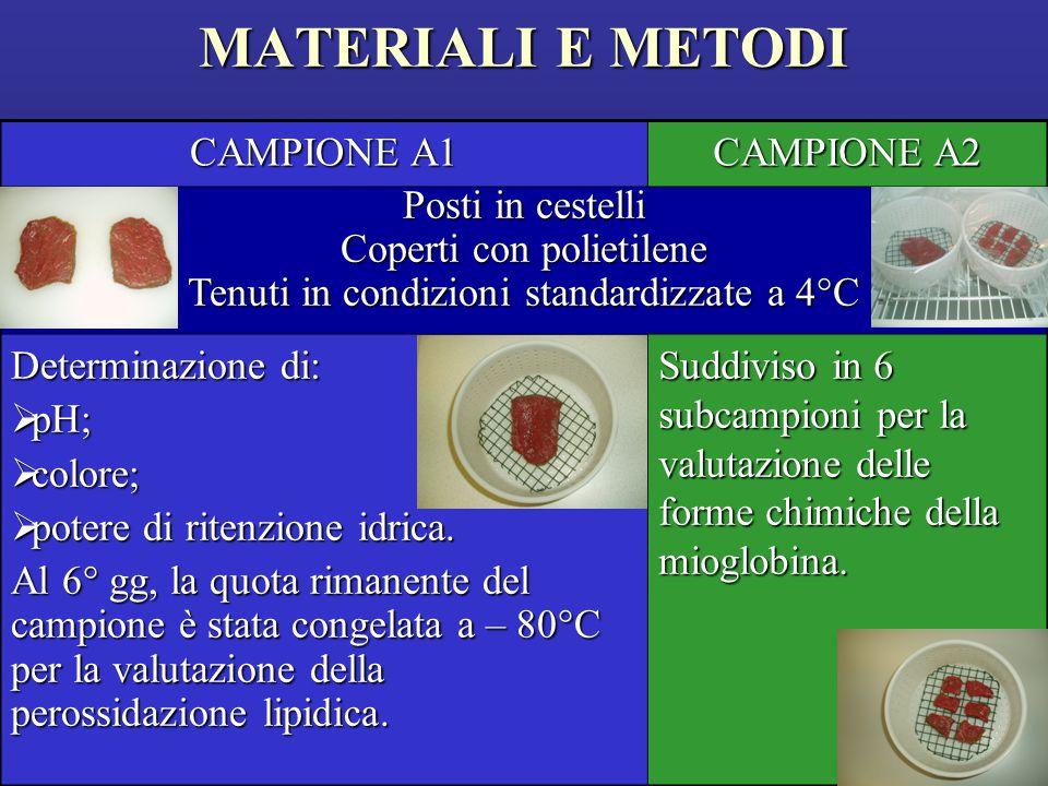MATERIALI E METODI CAMPIONE A1 CAMPIONE A2 Posti in cestelli Coperti con polietilene Tenuti in condizioni standardizzate a 4°C Determinazione di:  pH;  colore;  potere di ritenzione idrica.