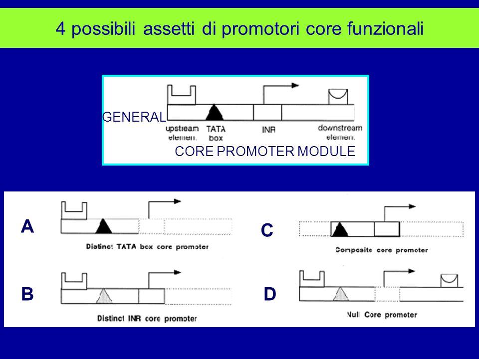 4 possibili assetti di promotori core funzionali A C BD CORE PROMOTER MODULE GENERAL