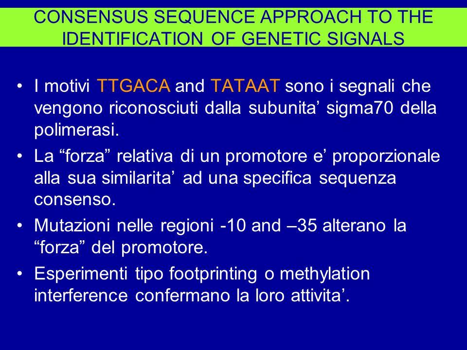 I motivi TTGACA and TATAAT sono i segnali che vengono riconosciuti dalla subunita' sigma70 della polimerasi.