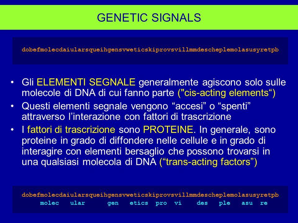 GENETIC SIGNALS dobefmolecdaiularsqueihgensvweticskiprovsvillmmdescheplemolasusyretpb Gli ELEMENTI SEGNALE generalmente agiscono solo sulle molecole di DNA di cui fanno parte ( cis-acting elements ) Questi elementi segnale vengono accesi o spenti attraverso l'interazione con fattori di trascrizione I fattori di trascrizione sono PROTEINE.