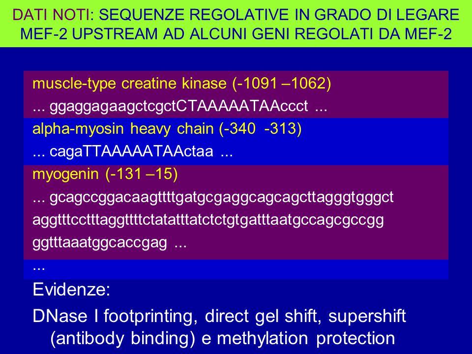 muscle-type creatine kinase (-1091 –1062)...ggaggagaagctcgctCTAAAAATAAccct...