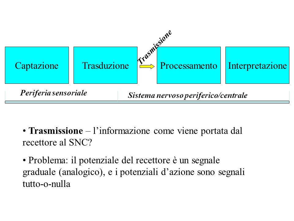 Trasmissione – l'informazione come viene portata dal recettore al SNC? Problema: il potenziale del recettore è un segnale graduale (analogico), e i po