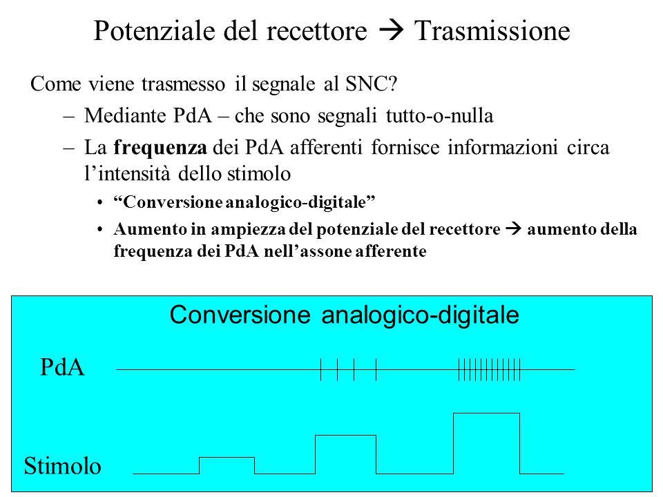 Potenziale del recettore  Trasmissione Come viene trasmesso il segnale al SNC? –Mediante PdA – che sono segnali tutto-o-nulla –La frequenza dei PdA a