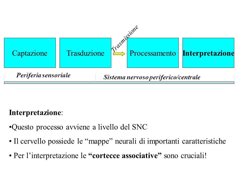 """Interpretazione: Questo processo avviene a livello del SNC Il cervello possiede le """"mappe"""" neurali di importanti caratteristiche Per l'interpretazione"""