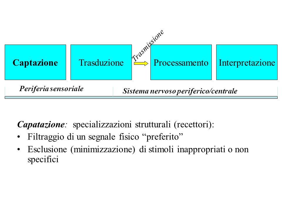 """Capatazione: specializzazioni strutturali (recettori): Filtraggio di un segnale fisico """"preferito"""" Esclusione (minimizzazione) di stimoli inappropriat"""