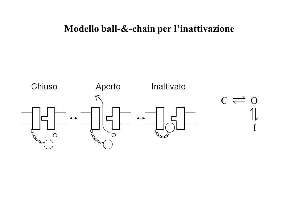 ChiusoApertoInattivato Modello ball-&-chain per l'inattivazione CO I
