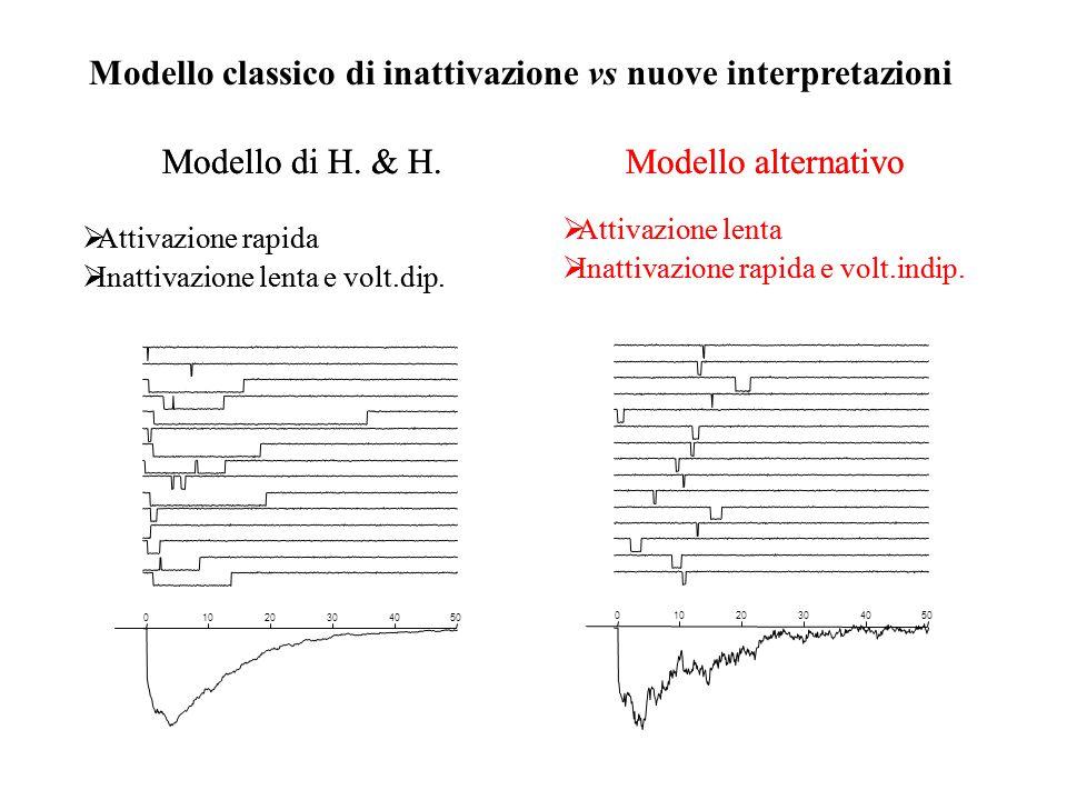 Modello classico di inattivazione vs nuove interpretazioni 01020304050 01020304050 Modello di H. & H.  Attivazione rapida  Inattivazione lenta e vol