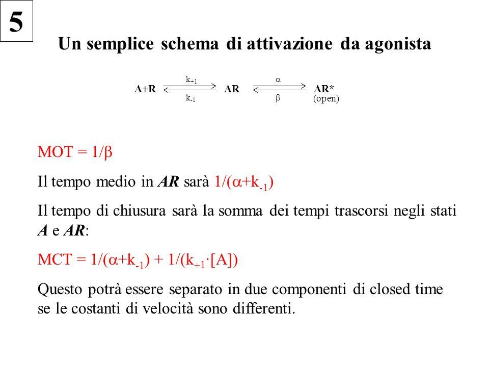 Un semplice schema di attivazione da agonista A+R k +1 k -1 AR   AR* (open) MOT = 1/  Il tempo medio in AR sarà 1/(  +k -1 ) Il tempo di chiusura sarà la somma dei tempi trascorsi negli stati A e AR: MCT = 1/(  +k -1 ) + 1/(k + 1 ·[A]) Questo potrà essere separato in due componenti di closed time se le costanti di velocità sono differenti.