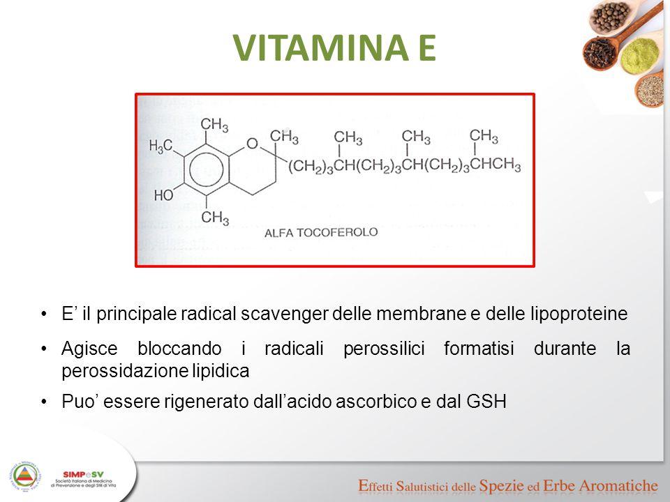 VITAMINA E E' il principale radical scavenger delle membrane e delle lipoproteine Agisce bloccando i radicali perossilici formatisi durante la perossi