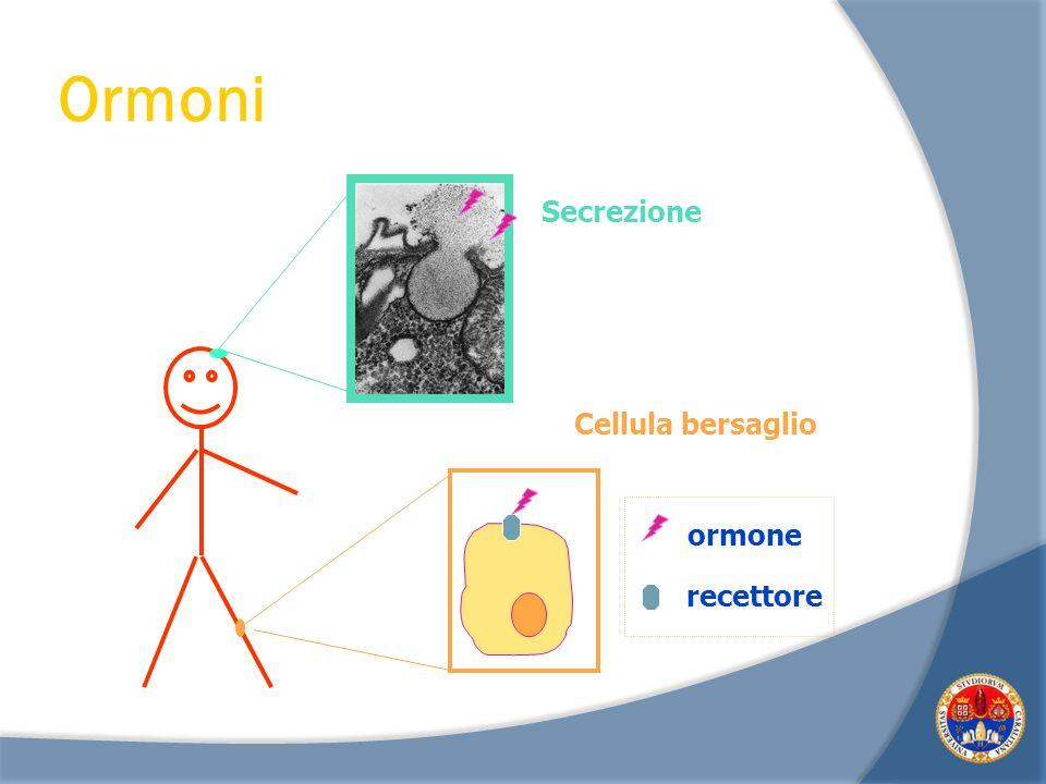 Un ormone agisce unicamente sulle sue cellule bersaglio perché: A) solo esse posseggono i recettori specifici per l'ormone B) solo esse contengono i g