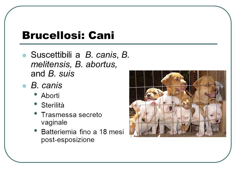 Brucellosi: Cani Suscettibili a B. canis, B. melitensis, B. abortus, and B. suis B. canis Aborti Sterilità Trasmessa secreto vaginale Batteriemia fino