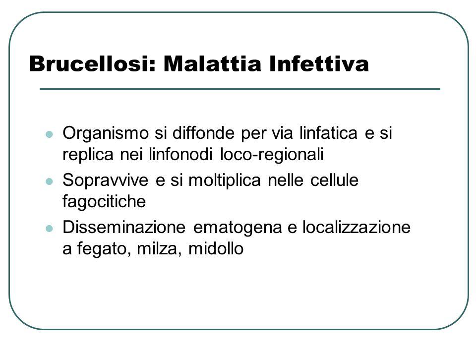 Brucellosi: Malattia Infettiva Organismo si diffonde per via linfatica e si replica nei linfonodi loco-regionali Sopravvive e si moltiplica nelle cell