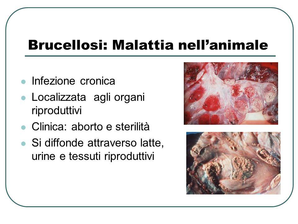 Brucellosi: Malattia nell'animale Infezione cronica Localizzata agli organi riproduttivi Clinica: aborto e sterilità Si diffonde attraverso latte, uri