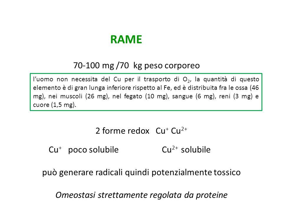2 forme redox Cu + Cu 2+ Cu + poco solubile Cu 2+ solubile può generare radicali quindi potenzialmente tossico Omeostasi strettamente regolata da prot