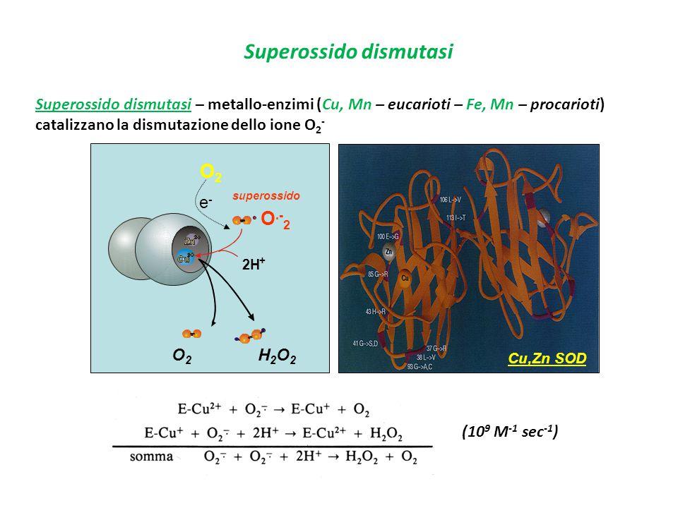Superossido dismutasi (10 9 M -1 sec -1 ) Superossido dismutasi – metallo-enzimi (Cu, Mn – eucarioti – Fe, Mn – procarioti) catalizzano la dismutazion