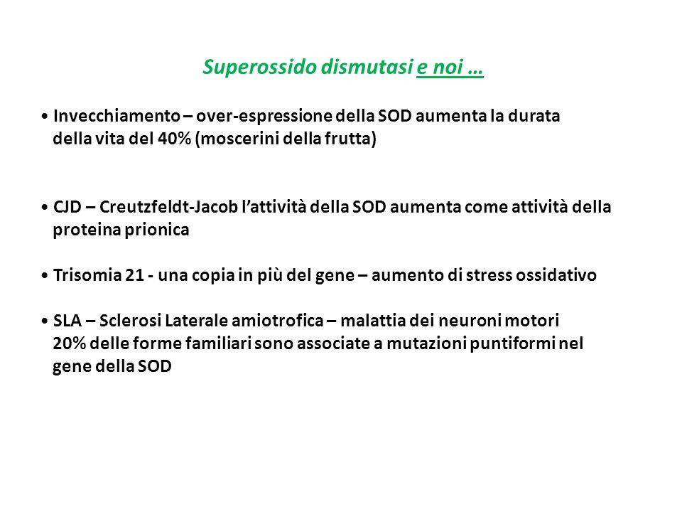 Superossido dismutasi e noi … Invecchiamento – over-espressione della SOD aumenta la durata della vita del 40% (moscerini della frutta) CJD – Creutzfe