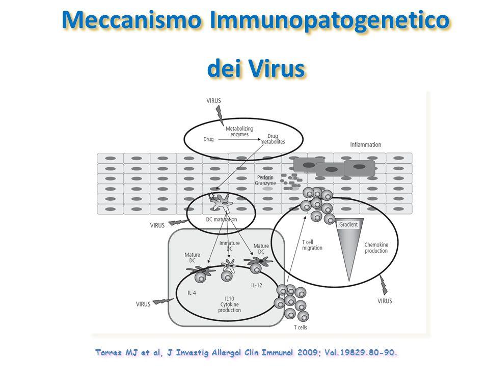 Torres MJ et al, J Investig Allergol Clin Immunol 2009; Vol.19829.80-90. Meccanismo Immunopatogenetico dei Virus Meccanismo Immunopatogenetico dei Vir