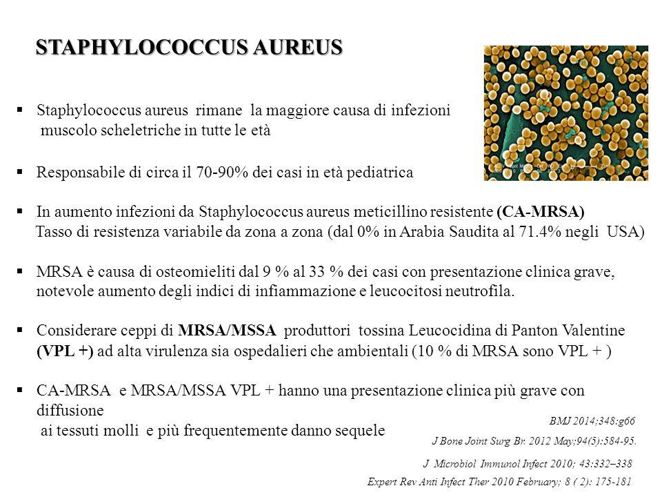  Staphylococcus aureus rimane la maggiore causa di infezioni muscolo scheletriche in tutte le età  Responsabile di circa il 70-90% dei casi in età p
