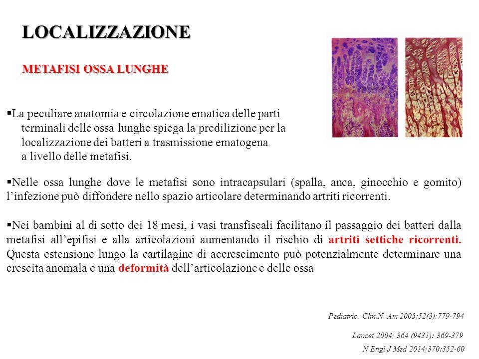  La peculiare anatomia e circolazione ematica delle parti terminali delle ossa lunghe spiega la predilizione per la localizzazione dei batteri a tras